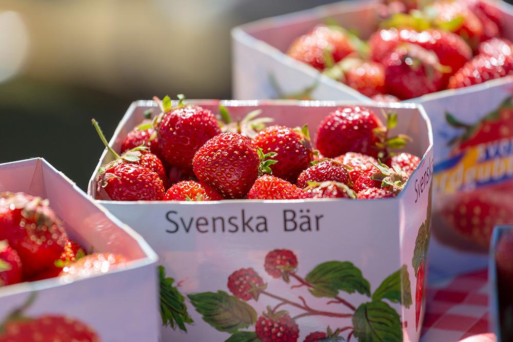 Tre fulla kartonger med stora röda saftiga svenska, ekologiska jordgubbar.