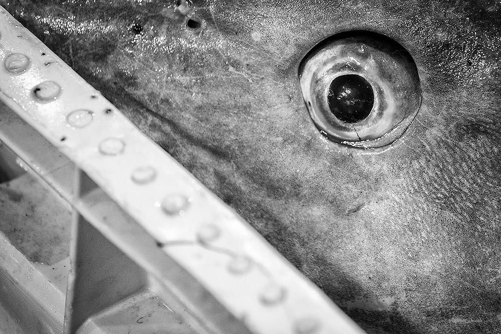 del av ett hajhuvud kikar fram med ett stirrande öga över plastkanten