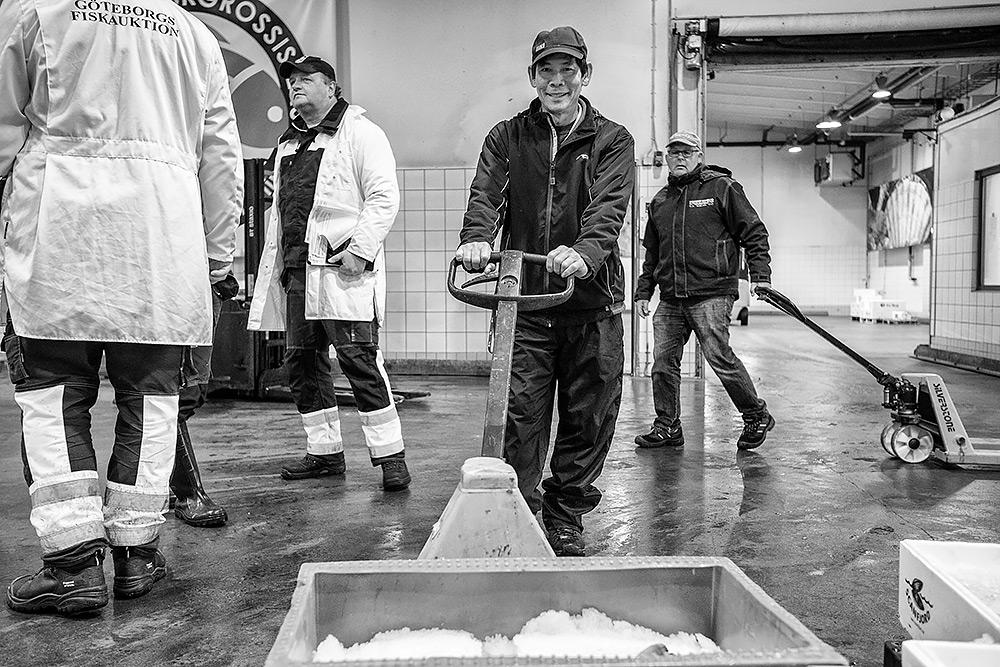 full aktivitet på fiskauktionen bland handlarna som kör lådor med pallyftare