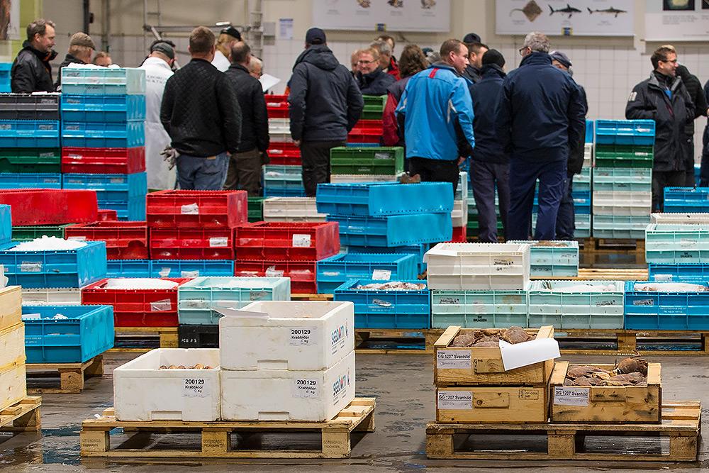 göteborgs fiskhamn, massor med färgglada lådor och män