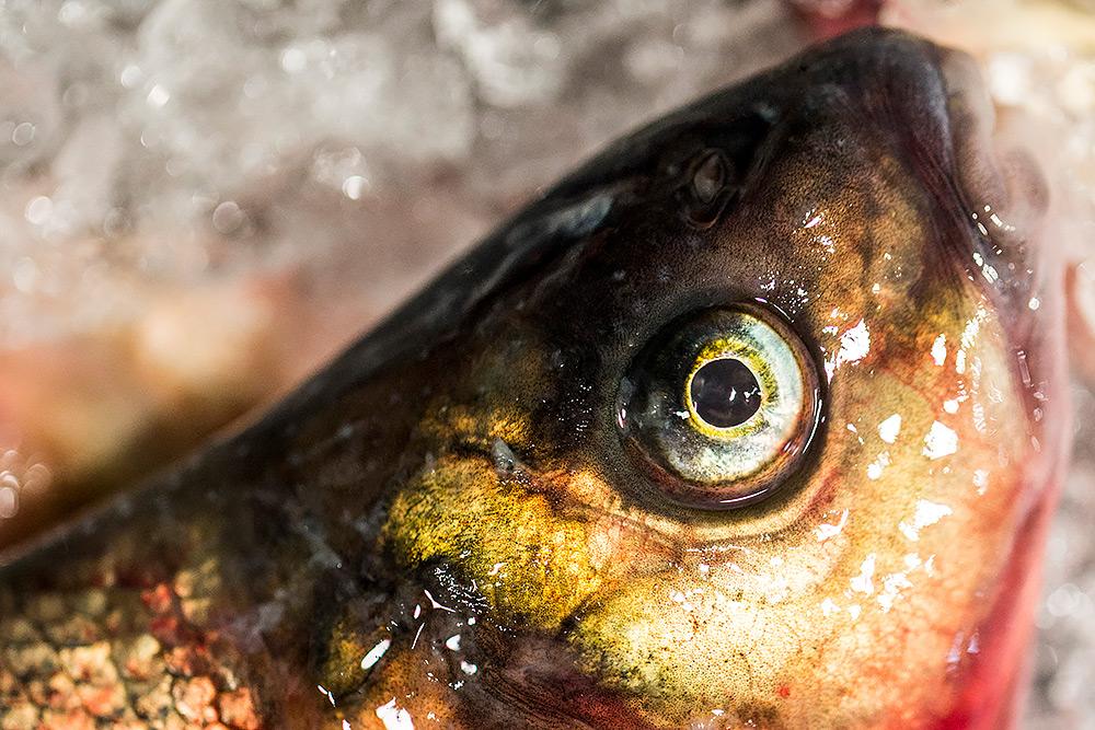 ett gulrött, glasigt fiskansikte