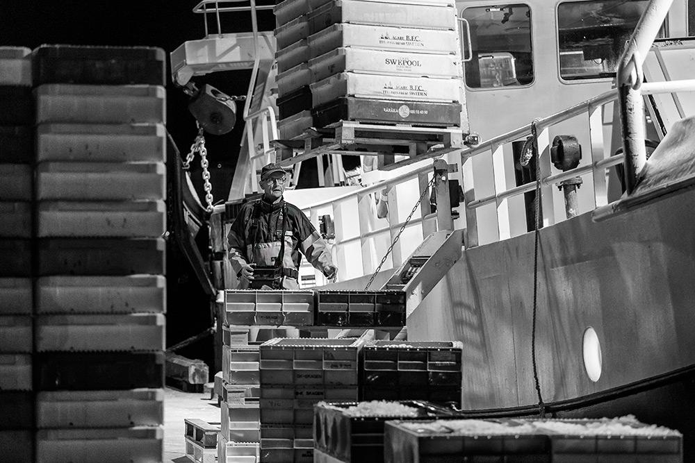 en fiskare kör travers och lastar av pallar med fisk från fiskebåten. det är mitt i natten och mörkt ute