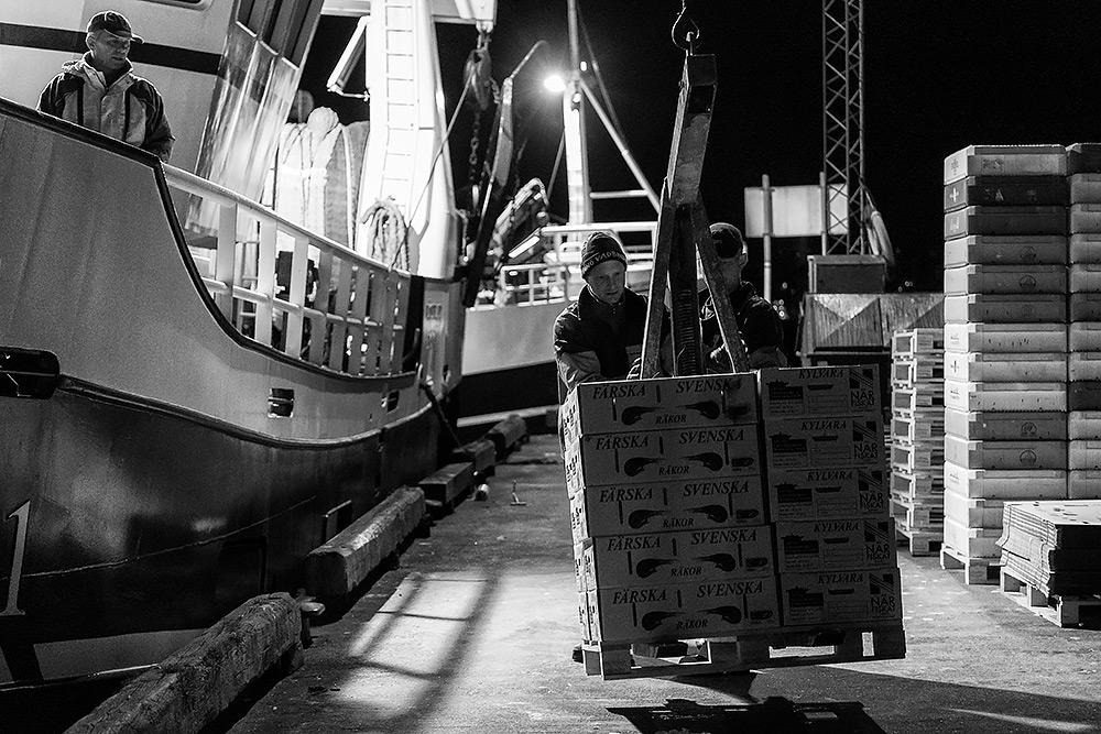 en fiskebåt står vid kaj och fångsten som kommer på pall lastas av